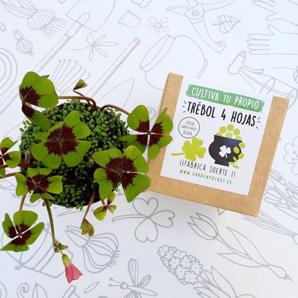 Kit cultivo trébol de 4 hojas Pocket Garden